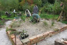 Bepflanzung des ersten Kiesbeets mit Flockenblume, Heilziest, Schwertalant, Steinquendel, Sonnen ...