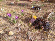 Der Frühling ist da und unsere Zwiebeln treiben aus😃