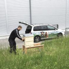 Aufbau Bienenstöcke