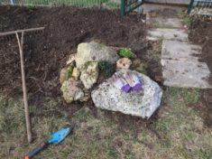 kleiner Steingarten im Aufbau