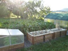 Das ist unser Gemüsegarten mit unseren zwei Gewächshäusern, in denen wir jeweils 6 Tomaten und e ...