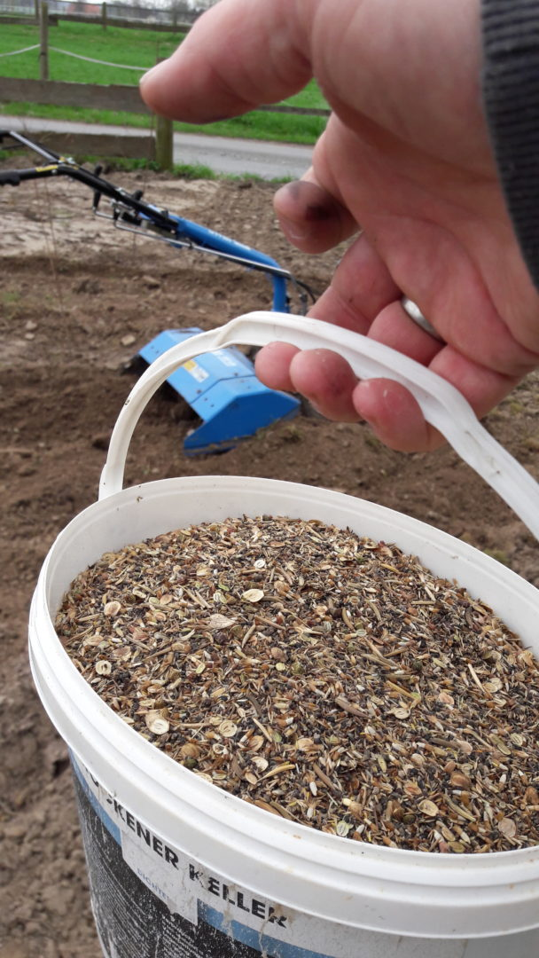 Tolles Blühwiesen-Saatgut