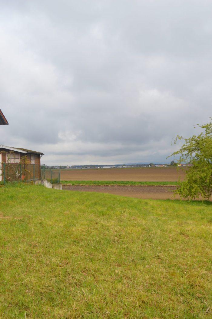 Vorher: eine Baulücke mit viel Gras…