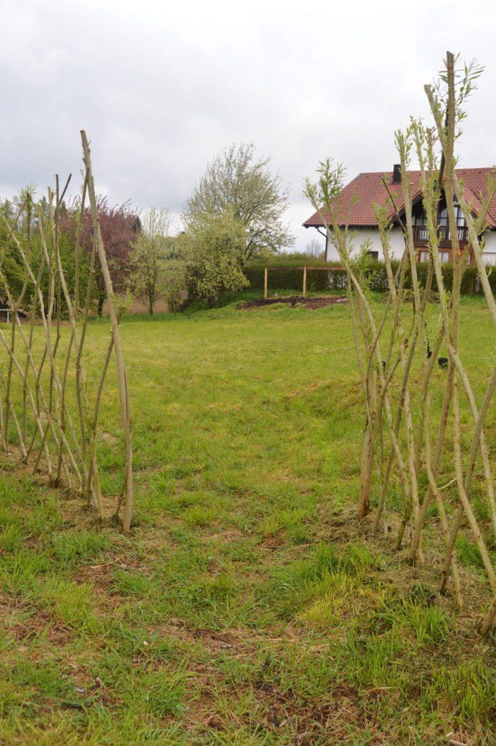 Unser Weidenzaun treibt schon, hier im Eingangsberich soll es mal üppig blühen: Nahrung für die  ...
