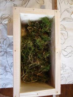 Mit Moos gefüllter Baumhummel-Kasten, dann Deckel drauf und ab in den Garten.