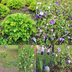 Blütenmosaik