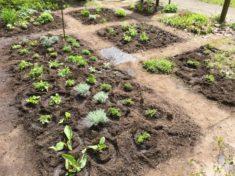 Das ist nur ein kleiner Ausschnitt der bepflanzten Fläche – wir sind auf die Blütenpracht  ...