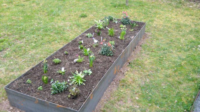 Das Beet ist fertig bepflanzt, es wurden nur noch zusätzlich Frühlingsblüher mit eingepflanzt, d ...