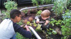 Buddeln und Pflanzen begeistert groß und klein :).