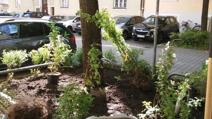Stellung der Pflanzen