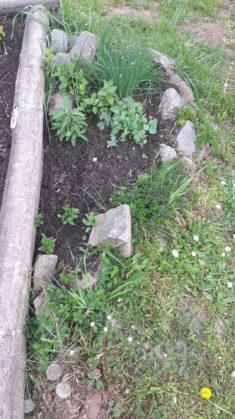 Der kleine Kräutergarten ist fast fertig.