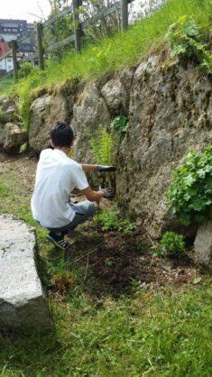 Bepflanzung der Steinmauer