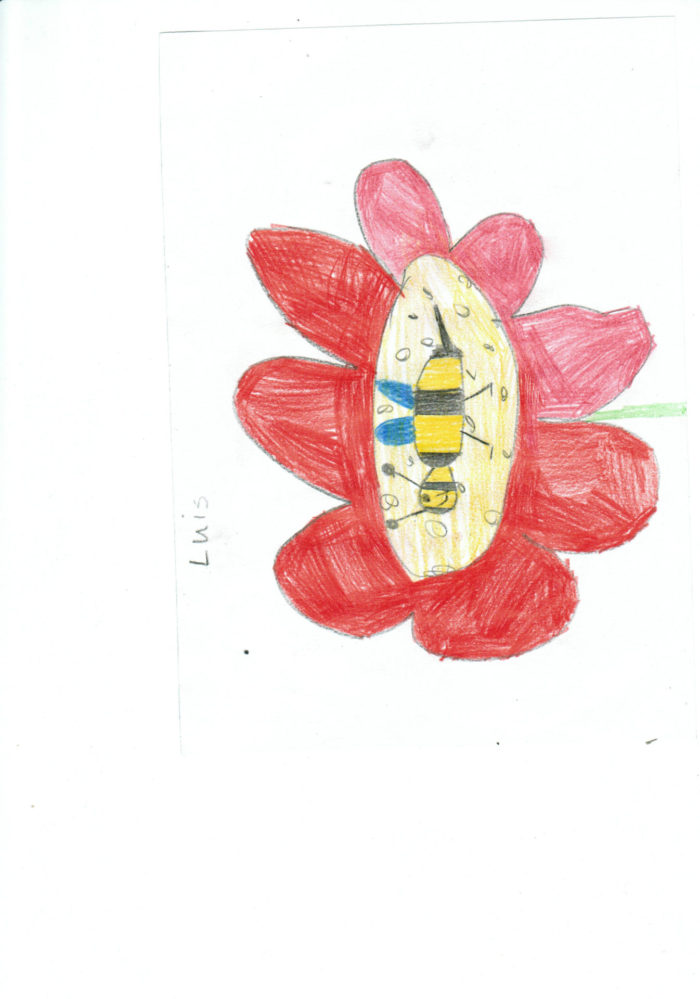 Die SchülerInnen der Grundschule Oldendorf haben tolle Bilder zur Aussaataktion und ihren wichti ...
