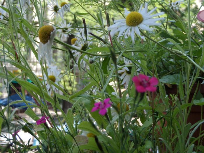 Miniblumenwiese