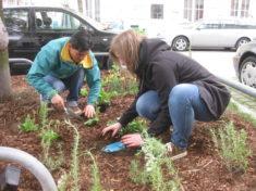 Pflanzung im vollen Gange (3)