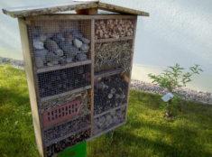 Insektenhotel mit Schmetterlingsflieder