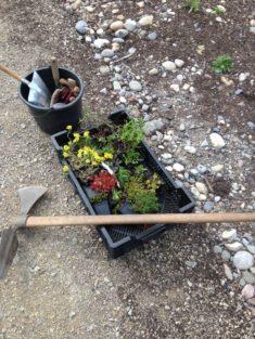 3. Schritt: Die Bepflanzung