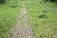 Nachdem Mitte Mai die ersten Pflanzen gekeimt sind wird es jetzt gegen Ende Mai schon grün auf d ...