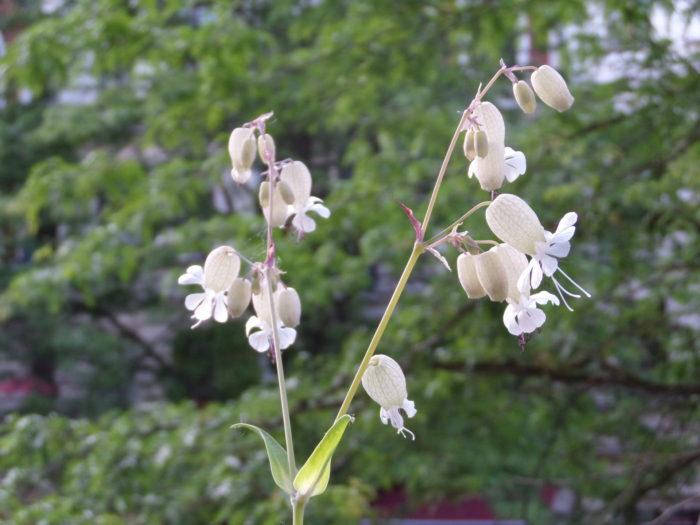 Naturschönheit und Bienenleckerli