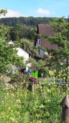Die Bienen auf dem Nachbargrundstück freuen sich