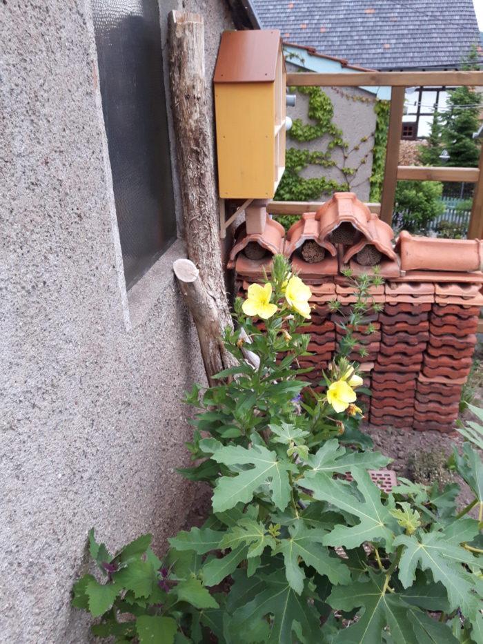 Die Nachtkerze blüht. Und am Totholz schaben sich die Wespen Baumaterial ab.