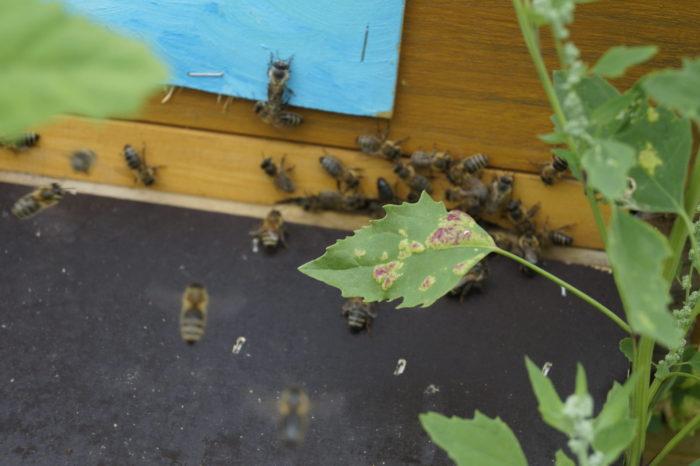 Unsere Bienen – Nahaufnahme