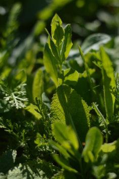 Auf den frisch eingesäten Flächen blüht noch nix, die Pflanzen schauen aber dank fleißigem Gieße ...
