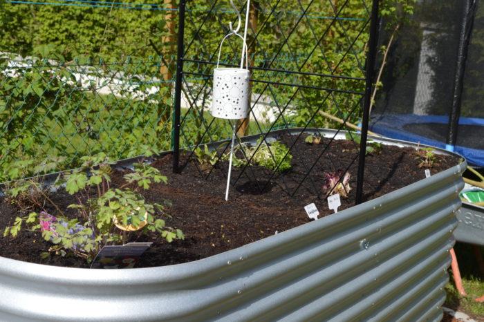 Die ersten Pflanzen sind gesetzt.
