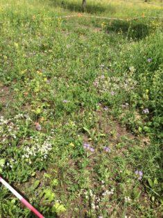 erste Blühpflanzen Ende Mai
