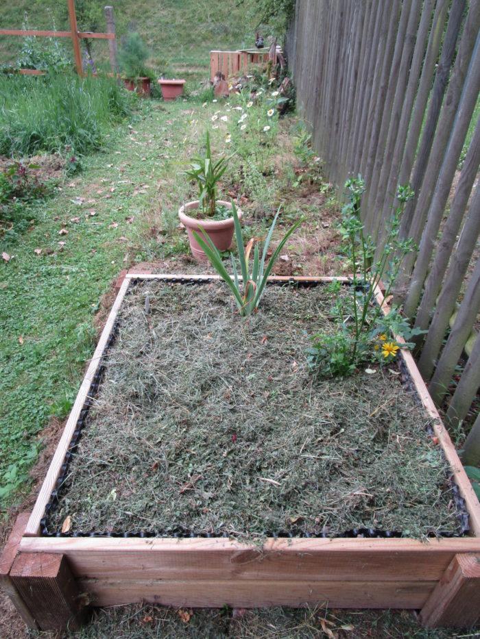 An diesem Zaun entlang wurden Heilkräuter in die bestehende Wiesenfläche gepflanzt. Im wühlmauss ...