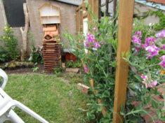 Die Staudenwicke am Spalier blüht nun auch. An der Wand: Insektenhotel in Arbeit.