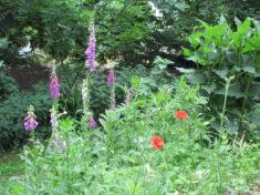 Das Ergebnis (1/4): wilder Blühstreifen