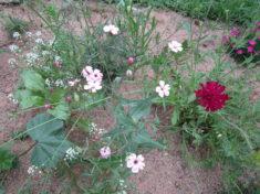Wunderschöne Blüten im Wiesenblumenbeet