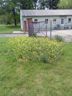 """Eine gelbe Blütenpracht, passendes """"Anflugs Ziel"""" für unsere Zielgruppe!"""