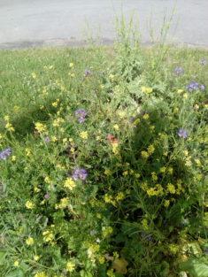 Hier auch mal gelb/ lila gemischt, mit Schmetterling.