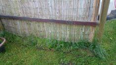 Unter dem Sichtschutz soll ein Stück Bienenweide entstehen. Außerdem etwa 10 qm in der Wiese.