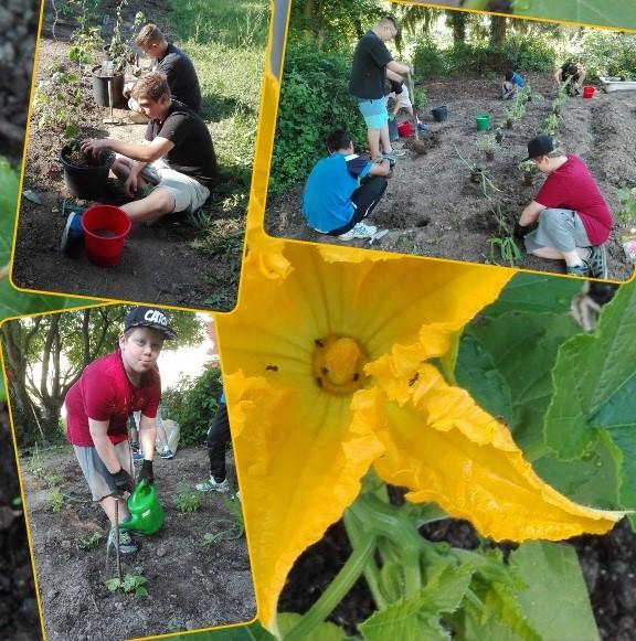Impressionen von unserer Gartenarbeit am 1. Juni