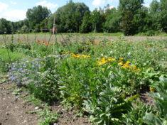 Ringel- und Kornblume – Futter to Go