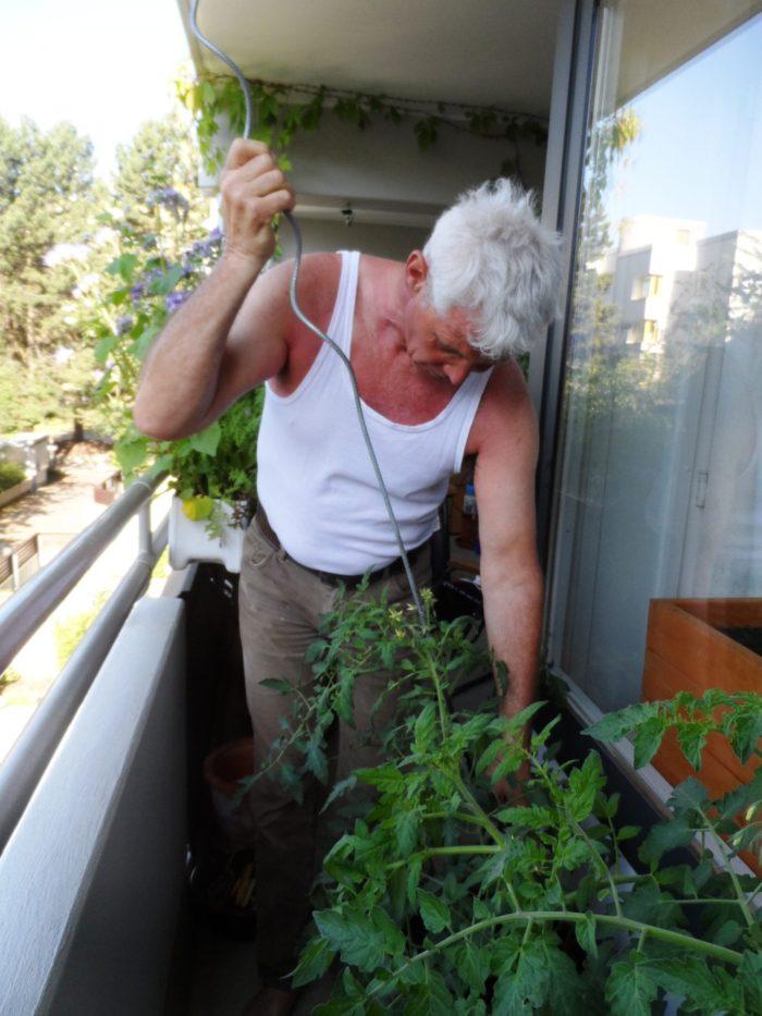 Michael beim Befestigen der Tomaten