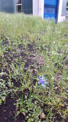 Die erste Blume