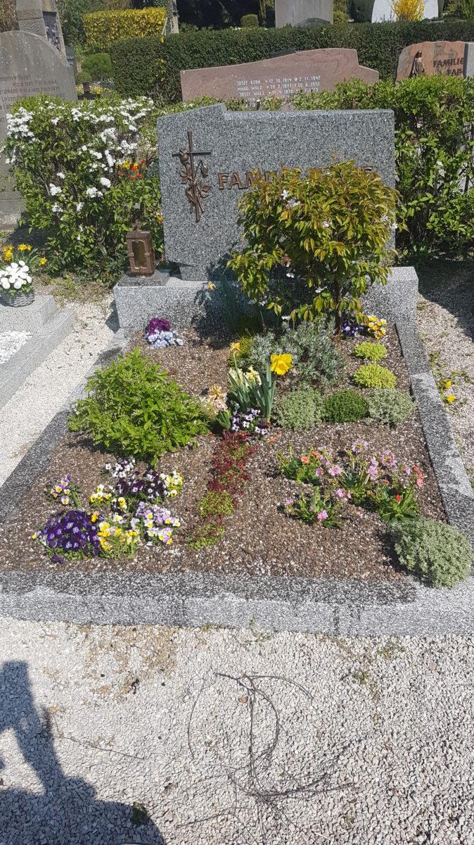Bienenfreundliche Grab-Neubepflanzung