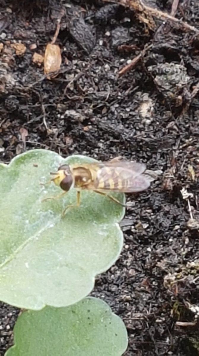Insekten gehen auf das Grab