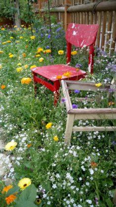 Mein Bienenparadies im Juli… Bezaubernd auch für alle vorbeilaufenden Touristen und Naumbu ...