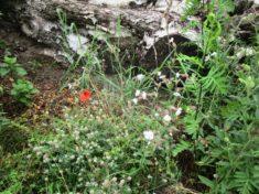 …ein schönes Eckchen am Birkenstamm