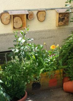 Hochbeet und Wildbienenkästen im Schulhof – karlsbienen