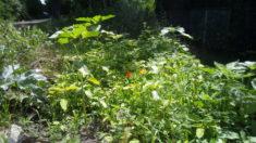 Die kleine Blumenwiese explodiert geradezu