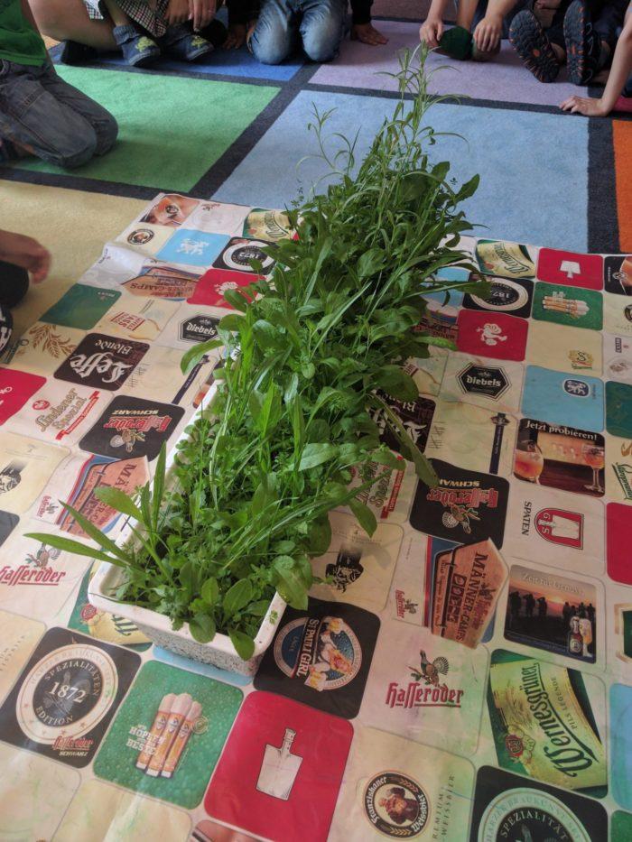 Letzte zu Besuch im Kindergarten: Die Kinder präsentieren mir stolz einen ihrer bepflanzten Blum ...