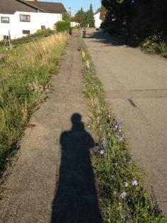 Natur wachsen lassen – Morgengruß durch die Wegwarte