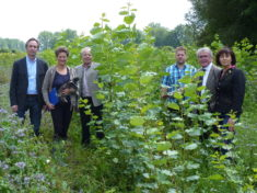 Energiewald Ampfing