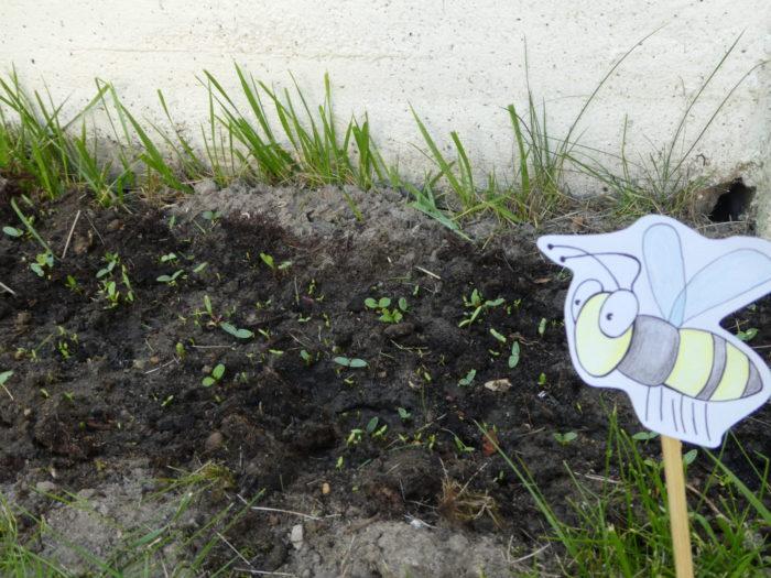 """Biene Glubsch: """"Oh wie aufregend. Hier wächst ja schon was. Ob das für mich ist?"""""""